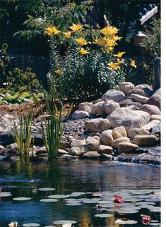 Plants for Ponds & Water Gardens: Simplify Pond Planting Pond Plants, Aquatic Plants, Water Plants, Pond Landscaping, Ponds Backyard, Garden Ponds, Garden Waterfall, Natural Pond, Pond Water Features