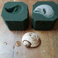 Reproducciones  de caracoles con silicona por Floristería Alameda en cartagena