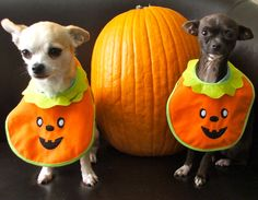 I don't know, these pumpkins may make us look fat!