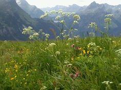 Alpen flora