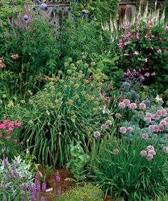Attract Attention with 2 Strong Shapes: A bed of globes and spires creates a long season of interest. Read the full article here http://www.finegardening.com/design/articles/globes-and-spires.aspx