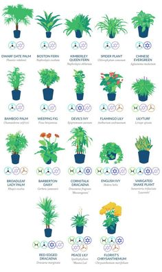 the most effective plants to keep for filtering out pollutants and toxic chemicals in your home.