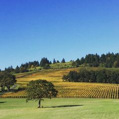 Autumn in Oregon's Wine Country.