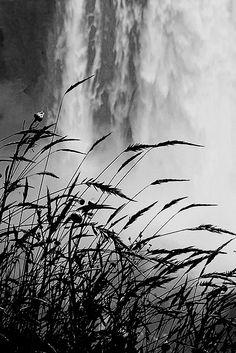 Snoqualmie Falls, WA