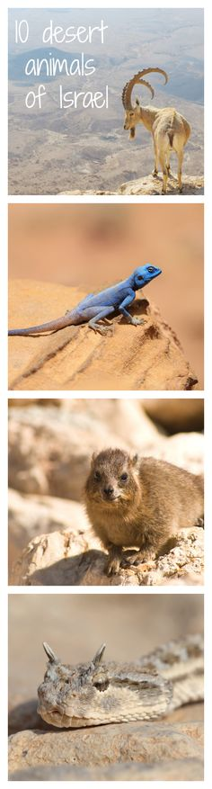 10 incredible desert animals that can take the heat