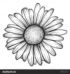 Beautiful Monochrome, Black And White Daisy Flower Isolated. For ...