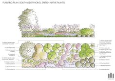 South West Facing British Native Plants FREE Planting Plan #Free #plantingplan…