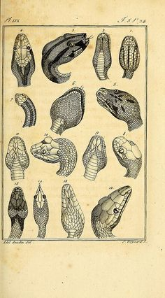 reptiles: structure following the general and particular natural history, made by Leclerc de Buffon, and written by CS Sonnini: