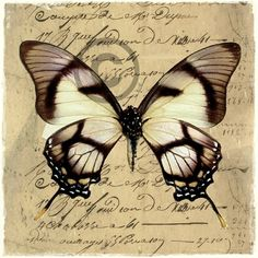 To sommerfugl-bilder, digital art. Vintage Labels, Vintage Ephemera, Vintage Paper, Vintage Butterfly, Butterfly Cards, Stencil, Art Doodle, Foto Transfer, Decoupage Paper