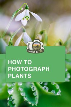 Learn how to photograph plants with this macro photography tutorial. Tips for getting creative and moving beyond a simple snapshot. Photography Tips Iphone, Double Exposure Photography, Levitation Photography, Creative Portrait Photography, Landscape Photography Tips, Scenic Photography, Photography Lessons, Photography For Beginners, Photography Tutorials
