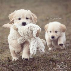 Puppies with their baby