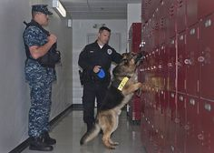 Master-at-Arms 2nd Class Derek Shibles and Lt. Steve Mabes, a civilian police officer for the Naval Station Everett Police Department, use military working dog Lery to find a simulated explosive device as part of a training exercise. Naval Station Everett maintains a kennel of military working dogs that assists in performing illegal drug and explosive searches as well as other law enforcement duties.