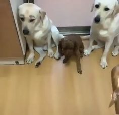 funny pictures of animals videos \ funny pictures - funny pictures lol - funny pictures to take with friends - funny pictures of animals videos - funny pictures of chickens Funny Animal Quotes, Animal Jokes, Cute Funny Animals, Cute Baby Animals, Funny Dogs, Wild Animals, Cute Puppy Videos, Funny Animal Videos, Videos Funny