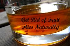 Fruit flies and gnats are the bane of many homeowners existence.With these 26 strategies.you can get rid of fruit flies and gnats fast and naturally. http://pestcontrolathome.com/get-rid-of-fruit-flies-and-gnats/
