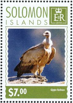 Griffon Vulture stamps - mainly images - gallery format