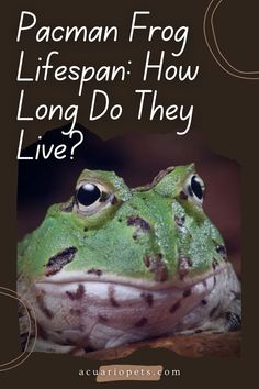 Frog Tank, Frog Terrarium, Pacman Frog, Breathe In The Air, Bone Diseases, Tropical Animals, Frog And Toad, Aquarium