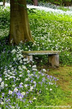 A simple stone bench is perfect for this country view