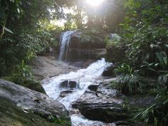 Amazon Rainforest - incredibly large ecosystem where nature is at once wild & mysterious.