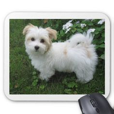 Havanese Puppy in the Garden Mouse Pad