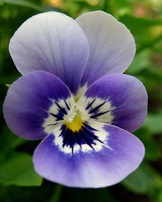 I love pansies, they remind me of my mother's china pattern