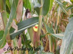 The Duck and the Corn Stalk: The Rubber Ducky Project Week 34 | Parenting Patch