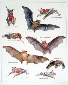 Popular items for vintage bat print on Etsy
