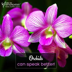 Try them! http://www.fnp.ae/ #fernsnpetalsUAE #love #orchids
