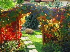 Pielęgnacja ogrodu, to niezmiernie ważny element wpływający na jego wygląd. Każdy ogród potrzebuje fachowej ręki po to, aby wyglądał ładnie, estetycznie.