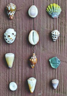 Shells. Pick a color combo. Any combo.
