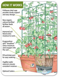 Growing Gardening: How To Make A Self Watering Container.     I see a DIY growing here !  I am  not paying 80 bucks for one planter!  YouTube is abundant with DIYs for self-watering pots !