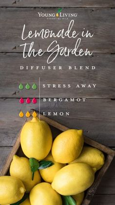 Young Living diffuser blend - - Get your nature fix with garden-inspired diffuser blends—no green thumb required! Young Living Oils, Young Living Diffuser, Young Living Bergamot, Young Essential Oils, Doterra Essential Oils, Yl Oils, Bergamot Essential Oil, Essential Oil Diffuser Blends, Diffuser Recipes