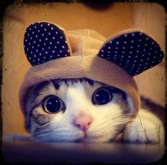 Cat in a hat with ears