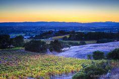 Paradise Ridge Winery, Sonoma