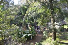 Dade City's Wild Things Sunken Jungle Trek