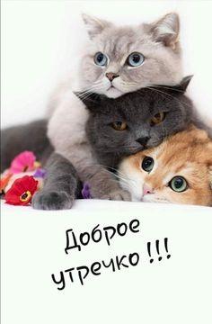 Кошки И Котята, Доброе Утро, Шутки, Животные, Картинки, Смешные Штуки