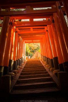 Tori gates in Kyoto,Japan