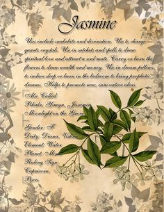 Book of Shadows: Herb Grimoire - Monkshood by CoNiGMa on DeviantArt Magic Herbs, Herbal Magic, Witch Herbs, Wolfsbane, Practical Magic, Healing Herbs, Vintage Diy, Back To Nature, Book Of Shadows