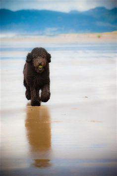 Clyde, having a ball at the beach!