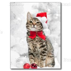 """"""" Cats Post Cards Christmas Cat At Red Santa's Hat Near Christmas Post Cards Vintag. Cute Kittens, Cats And Kittens, Kitty Cats, Christmas Cat Memes, Christmas Animals, Christmas Holiday, Christmas Tree Poster, Christmas Postcards, Christmas Portraits"""
