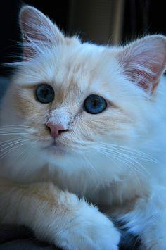 Imao cat by Evilspoon7 Imao cat... - Magical Meow