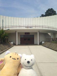 クマ散歩:越生に品行方正なクマ出没3 The Bear took a walk around Ogose!♪☆(^O^)/  #越生 #品行方正 #Bear