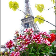 Bonjour  Good Morning  Bom dia  Buenos dias Guten Morgen Dzien dobry Namascar καλημέρα Buongiorno Salam alikoum  Thanks to Facebook Friend Dr-Harsha Vardhan Reddy.  #paris #parisalwaysanamazingidea #fleur #flower #sacrecoeur #montmartre VisitParis #france #instagood #instalike #bestoftheday #tagforlikes #gorgeous #巴黎 #巴黎世家 #followme #amazing #париж #picoftheday #باريس