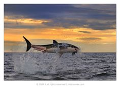 Why dont people fly like biSHARKS?