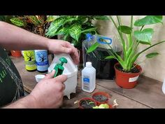 KILLING SPIDER MITES & APHIDS DEAD. - YouTube Killing Spiders, Spider Mites, The Secret, Plant Leaves, Gardening, Youtube, Plants, Outdoors, Dust Mites