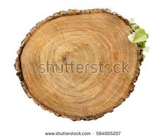 Large circular piece of wood cross section with tree ring texture pattern and cracks isolated on white background. Ivy growing on the side of the bark. Roof Ideas, Tree Rings, Wood Crosses, House Roof, Textures Patterns, Ivy, Wooden Crosses, Hedera Helix, Ivy Plants