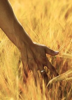 They say that holo roams the wheat fields with her blessings and watchful gaze. 'No good deed goes unpunished'