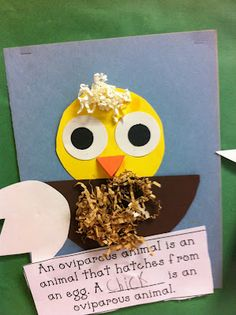 Oviparous animals - really cute printable poem to use as well!