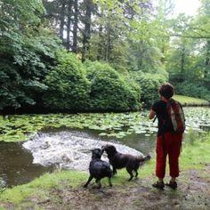 Alle hondenlosloopgebieden - Lekker wandelen met uw hond in mooie losloopgebieden!
