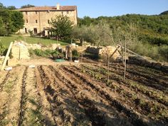 Living sustainably - the veggie patch at Tribewanted, Monestevole #italy #CulturalTravel #Eco #ecoDestination #EcoTourism #EcoTravel #Community #Green #greenDestination #GreenTravel #NatureTravel #susty #SustainableLiving #ResponsibleTourism #ResponsibleTravel #Voluntourism #sustainability