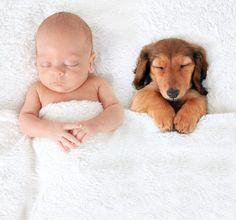 QUESTE foto del bambino Confermare GLI ANIMALI Sono L'assoluto Cutest Nap Amici | The Huffington Post